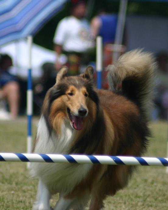 lassie-1.jpg