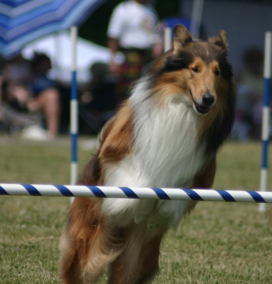 lassie-2.jpg