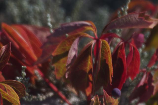 barney-flowers.jpg