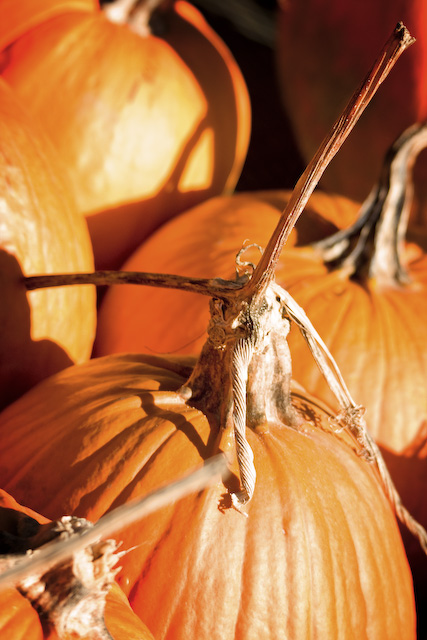 gnarley-pumpkin-1-of-1.jpg