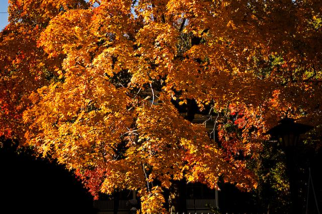 my-tree-1-of-1.jpg