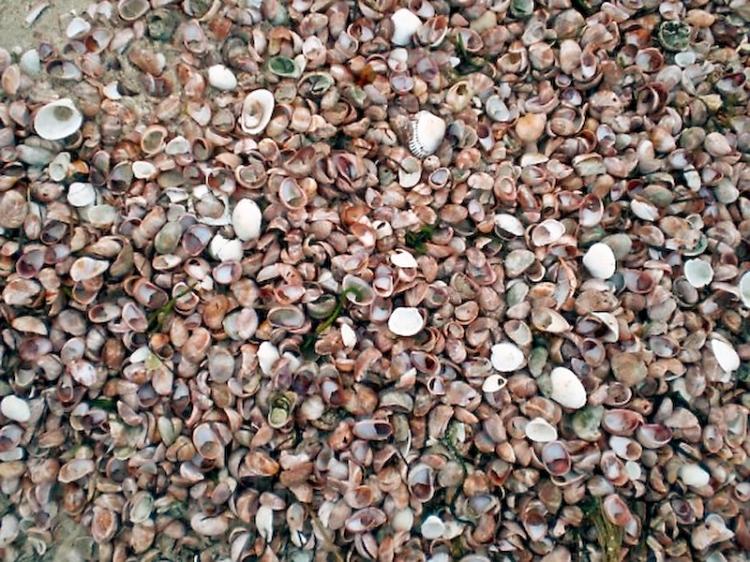 many-shells-1-1-of-1.jpg