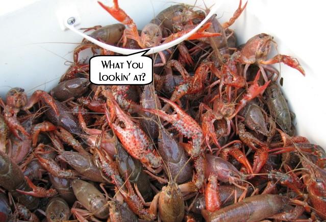 crawfish-2.jpg